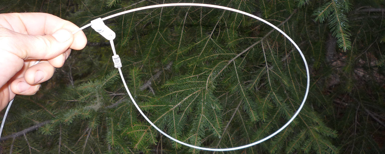 Wire Snare for trapping