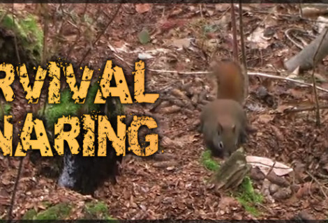 Survival Snaring Video Released